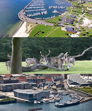Her ses 3 små billeder af marinaen i middelfart, dyreskoven og kulturøen, alt sammen noget som ligger inden for en overkommelig rækkevide til Comwell Middelfart